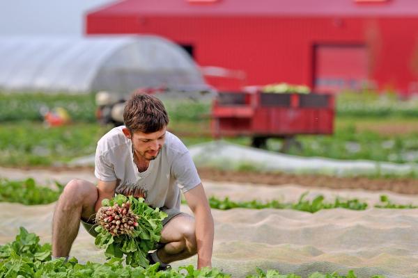 Agriculture et alimentation : Terreau fertile